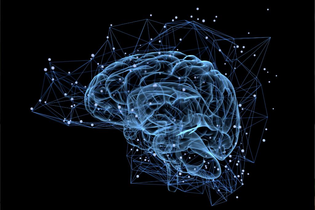 Le rôle du cerveau dans la perte de poids